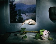 contemporary still life photography - Google Search