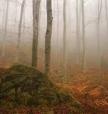 Bildergebnis für misty forest  autumn walk photography