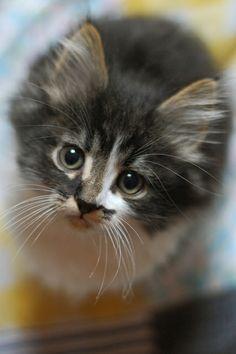 same kitty, obviously i'm in love