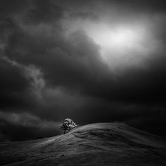 The Solitary Trees of Northern California in Infrared - Photograph by NATHAN WIRTH