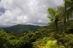 El Yunque - the US's only rainforest national park, in Puerto Rico (hope to see it in 10/12)
