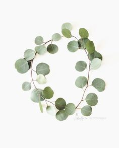 """Eucalyptus Circle""- Sweet silver dollar eucalyptus branches joined in a circle. Professionally printed upon order. My photographs are professionally printed with archival inks on prem Leaf Photography, Plant Aesthetic, Deco Floral, Eucalyptus Leaves, Green Art, Silver Dollar, White Decor, Minimalist Art, Leaf Prints"