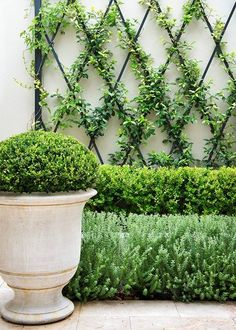 Small garden inspiration - the layering of plants of different heights . - Small garden inspiration – Layering plants of different heights gives depth to a narrow bed, whil - Courtyard Landscaping, Small Courtyard Gardens, Vertical Gardens, Small Gardens, Outdoor Gardens, Courtyard Ideas, Country Landscaping, Outdoor Plants, Rock Landscaping