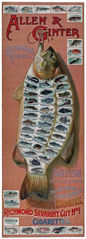 Allen & Ginter: 50 fish from American Waters.  An advertising poster for Allen & Ginter, manufacturers of cigarettes: 'Allen & Ginter, Richmond, Virginia. 50 fish from American waters. You will catch one in each package of Virginia Brights. Richmond Straight Cut No.1 Cigarettes.' Created before 1900.