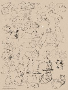 Cat sketches by shideh.deviantart.com
