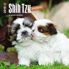 Shih Tzu Puppies 2018 Mini Wall Calendar