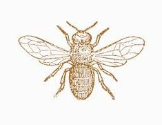 vintage honey bee illustration -