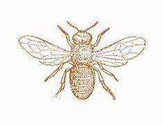 vintage honey bee illustration -