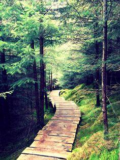 """""""Outlandia"""" trail, Glen Nevis, Scotland"""