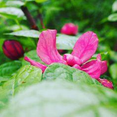 Hidden beauty after the spring rain. #thebotanicallife #flower #flowers #flowerstagram #botanical #plants #plant