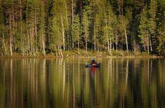 norrlands skog - Google Search
