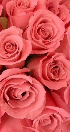 Roses. 26 Valentine's Day Flowers wallpapers for iPhone. - @mobile9 #744x1392 #Parallax