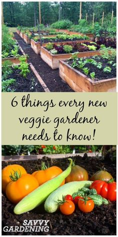 Indoor Vegetable Gardening 6 Things every new vegetable gardener needs to know! (Savvy Gardening) - Start your vegetable garden off right with these 6 vegetable gardening tips from Savvy Gardening! From sun to soil to picking crops, we've got you covered! Vegetable Garden Planner, Indoor Vegetable Gardening, Veg Garden, Organic Gardening Tips, Hydroponic Gardening, Edible Garden, Container Gardening, Beginner Vegetable Garden, Gardening Tools