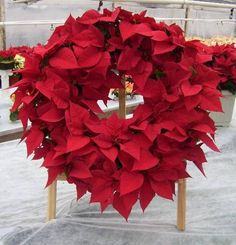pictures+of+red+and+white+deco+mesh+christmas+wreaths | ... Christmas Wreaths - Ideas for Decorating Your Outdoor Holiday Wreaths