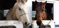 Horse Slaughter Is Not Euthanasia.