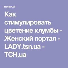 Как стимулировать цветение клумбы - Женский портал - LADY.tsn.ua - ТСН.ua