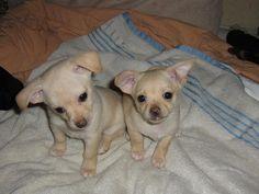 Cute puppy and dog - http://www.1pic4u.com/blog/2014/11/02/suesse-hundebabys-104/