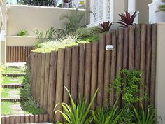 cerca eucalipto jardim - Pesquisa Google