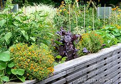 Vegetable garden bed with flowers and herbs plants in the summertime on the raised garden bed.