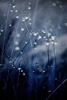 13 Fabulous Photos of a Rainy Day - Digital Photography School Dew Drops, Rain Drops, Fotografia Macro, Love Rain, Digital Photography School, Singing In The Rain, Water Droplets, Macro Photography, Levitation Photography