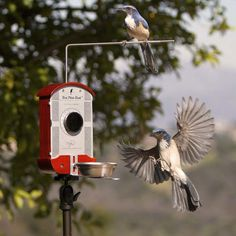 27.) A bird feeder with a built in camera. What a wonderful idea for your favorite bird watcher.