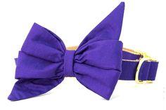 Royal Purple Belle Bow Dog Collar