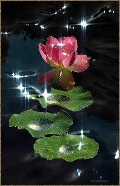 Лотос, кувшинка водяная лилия gif анимация