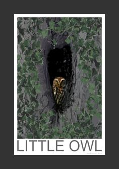 Little Owl (Art Print)
