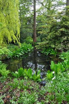 Arboretum Trompenburg, Rotterdam,  eigen foto/ own photo