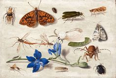 Jan van Kessel the Elder - A Still Life of Moths, Insects and a Stem of Delphinium