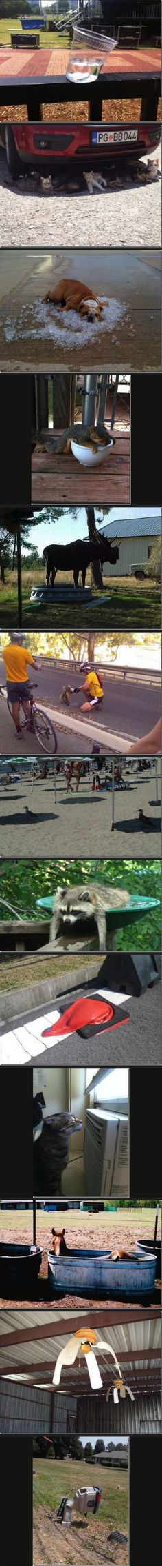 Funny Pictures of the week -71 pics- You Know It's Hot When ... (Compilation)