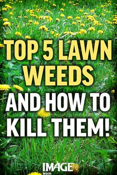 Gardens Discover Kill difficult lawn weeds protect your grass and keep your thick beautiful lawn. Killing Weeds In Lawn Kill Weeds Not Grass How To Kill Grass Grass Weeds Lawn Repair Weed Types Cannabis Types Lawn And Garden Garden Weeds Killing Weeds In Lawn, Kill Weeds Not Grass, How To Kill Grass, Grass Weeds, Lawn Repair, Types Of Lawn, Weed Types, Lawn Care Business, Gardens