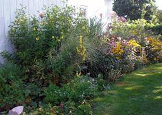 Bird & Butterfly Garden - the Violet Fern Art Studio & Garden