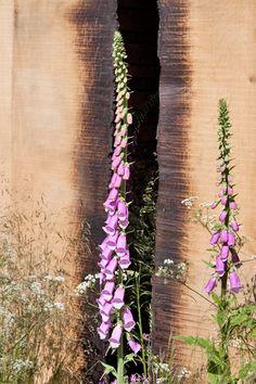 RHS Chelsea Flower Show 2014 – The Cloudy Bay Sensory Garden