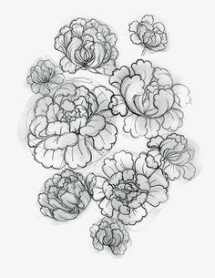 ............................................................................................. Illustrations, Tattoos, Flowers, Tatuajes, Tattoo, Floral, Illustration, Royal Icing Flowers, Cuff Tattoo