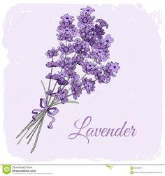 Lavender Background Stock Vector - Image: 56560971