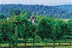North Carolina Wine - As well as being the home of America's first grape, North Carolina is the only place in the world where every major type of grape is grown. With more than 400 vineyards and 100 wineries across the state, viticulture is a major North Carolina industry.