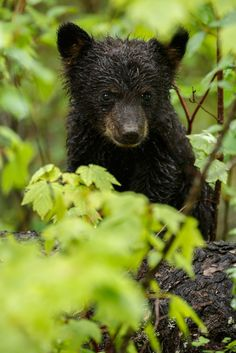 We have some of the most cute baby animals here in the Smoky Mountains!