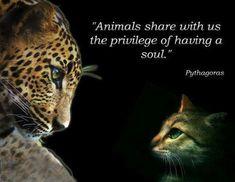 famous animals quetos