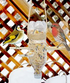 Taking Care of Backyard Birds This Winter: Make A Simple DIY Bird FeederOne Good Thing by Jillee | One Good Thing by Jillee