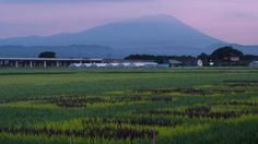 岩手山 タイムラプス 紫の朝焼け雲と流れ