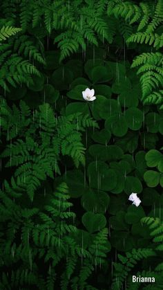 Delicados & Coloridos Green Backgrounds, Phone Backgrounds, Wallpaper Backgrounds, Beautiful Nature Wallpaper, Beautiful Landscapes, Green Wallpaper, Nature Photos, Aesthetic Wallpapers, Nature Photography