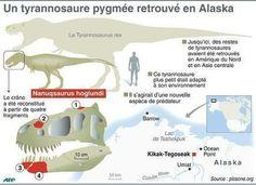 Un petit tyrannosaure vivait en Alaska il y a 70 millions d'années