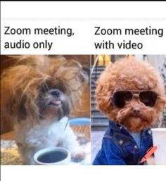 Funny Animal Memes, Really Funny Memes, Stupid Memes, Stupid Funny Memes, Funny Relatable Memes, Haha Funny, Funny Cute, Funny Animals, Funny Stuff