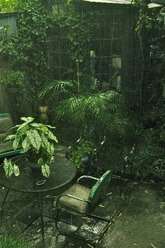 Rainy garden