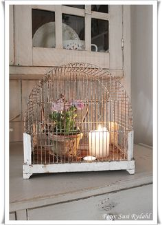vintage birdcage with plant and candle