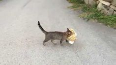 My cat went to the neighbours to borrow a tiger plush toy :) Haha!