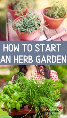 How to start an herb garden. Learn the basics of herb gardening for beginners. Get tips, tricks, and learn the basics of starting an herb garden.