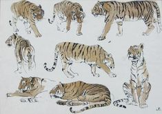Tiger Illustration, Tiger Drawing, Tiger Art, Big Cats Art, Cat Art, Animal Sketches, Animal Drawings, Drawing Reference Poses, Art Reference