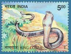 SG # 2169 (2003), King Cobra http://www.indiapicks.com/stamps/Nature_Fauna/NAN_Animals_Main.htm